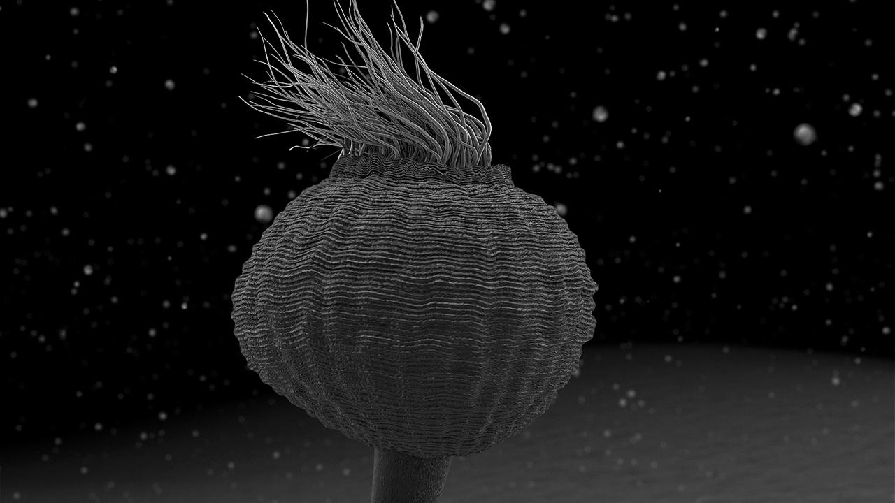 nanocam-documental-el-exilio-vorticella-microstoma-1280x720-rgb